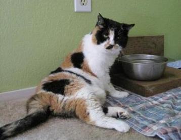 Aretha kitty